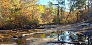 Line Creek Nature Area in Peachtree City. Photo/Southern Conservation Trust website.