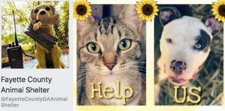 Screen grab of Fayette County Animal Shelter's Facebook page.
