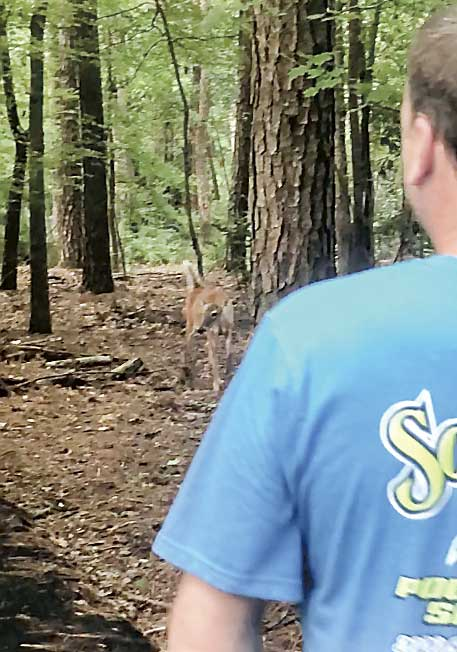 Doe and man in a close encounter on the cart path. The doe subsequently followed the woman toward her home. Photo/Screen grabs of video by Carolyn Taylor.