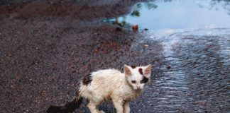 New Fayette ordinance to deal with feral cats. Photo/Shutterstock.