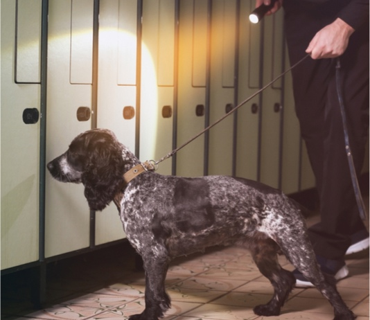 Stock photo of drug-sniffing dog at a set of lockers. Photo/Shutterstock.