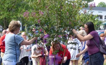 Friends and family of those who lost their lives to drug overdose remembered their loved ones at an Aug. 31 ceremony in downtown Fayetteville, where a Crepe Myrtle was planted at the gazebo. Photo/Ben Nelms.