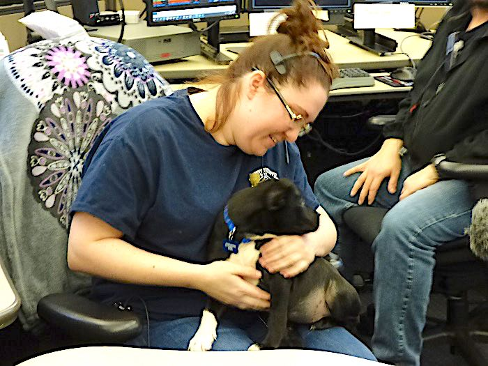 <b>Dispatcher Ashleigh Sawyer holds the 911 puppy as it gets accustomed to its new surroundings. Photo/Ben Nelms.</b>