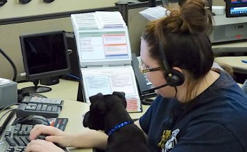 """Fayette County 911 dispatcher Ashleigh Sawyer was one of several dispatchers welcoming a pit bull mix puppy to the center on Feb. 19 as part of the new """"Headset Heelers"""" program, designed to reduce dispatchers' stress while providing socialization for the puppy. Photo/Ben Nelms."""
