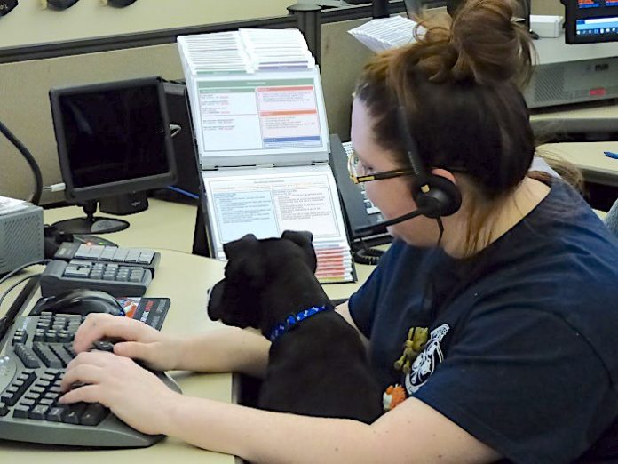 Fayette County 911 dispatcher Ashleigh Sawyer was one of several dispatchers welcoming a pit bull mix puppy to the center on Feb. 19 as part of the new