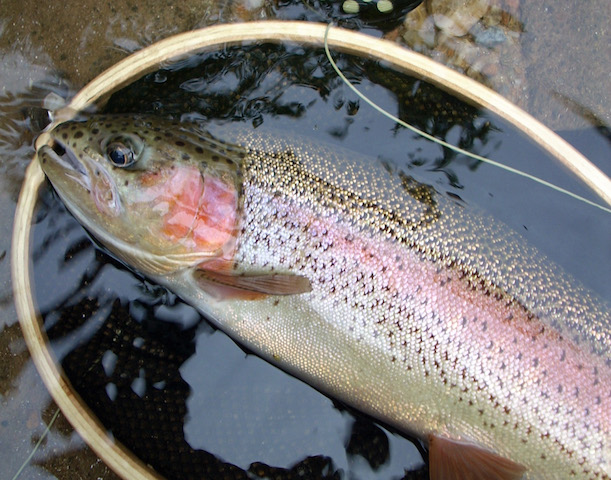 Trout streams are perfect for fall fishing - The Citizen